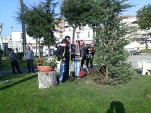 giornata della memoria albero (1)