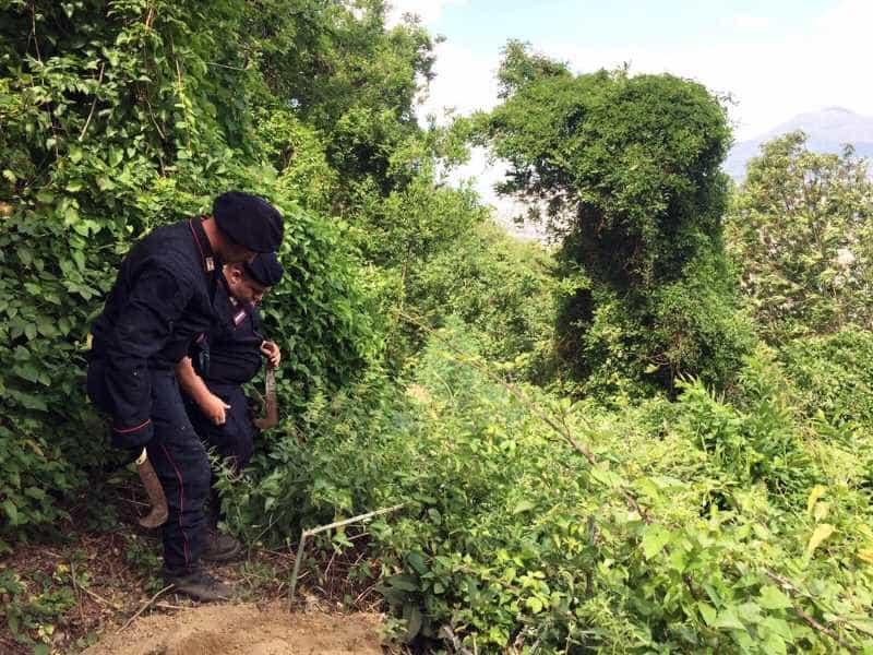 piantagione cannabis monti Lattari