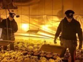 serra marijuana somma vesuviana