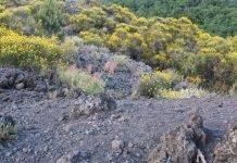 fiume di lava vesuvio